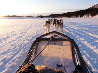 Finnland Hundeschlittenfahrt
